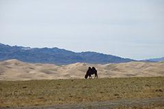 mongolie-9
